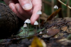 Mushrooms, Vancouver, Canada